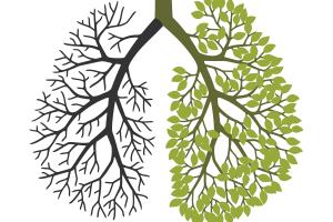 nicotine lungs