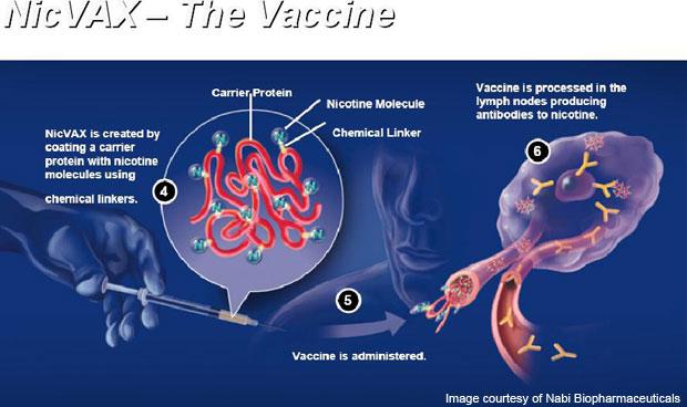 quit smoking vaccine nicvax