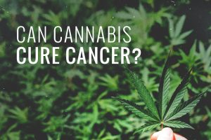can_weed_cure_cancer