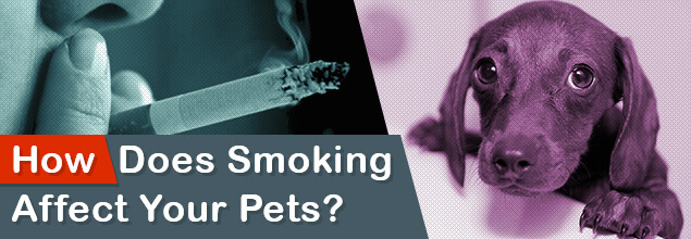 How does smoking affect your pets